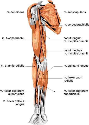 artrita genunchiului este tratată dureri articulare brațe umerilor