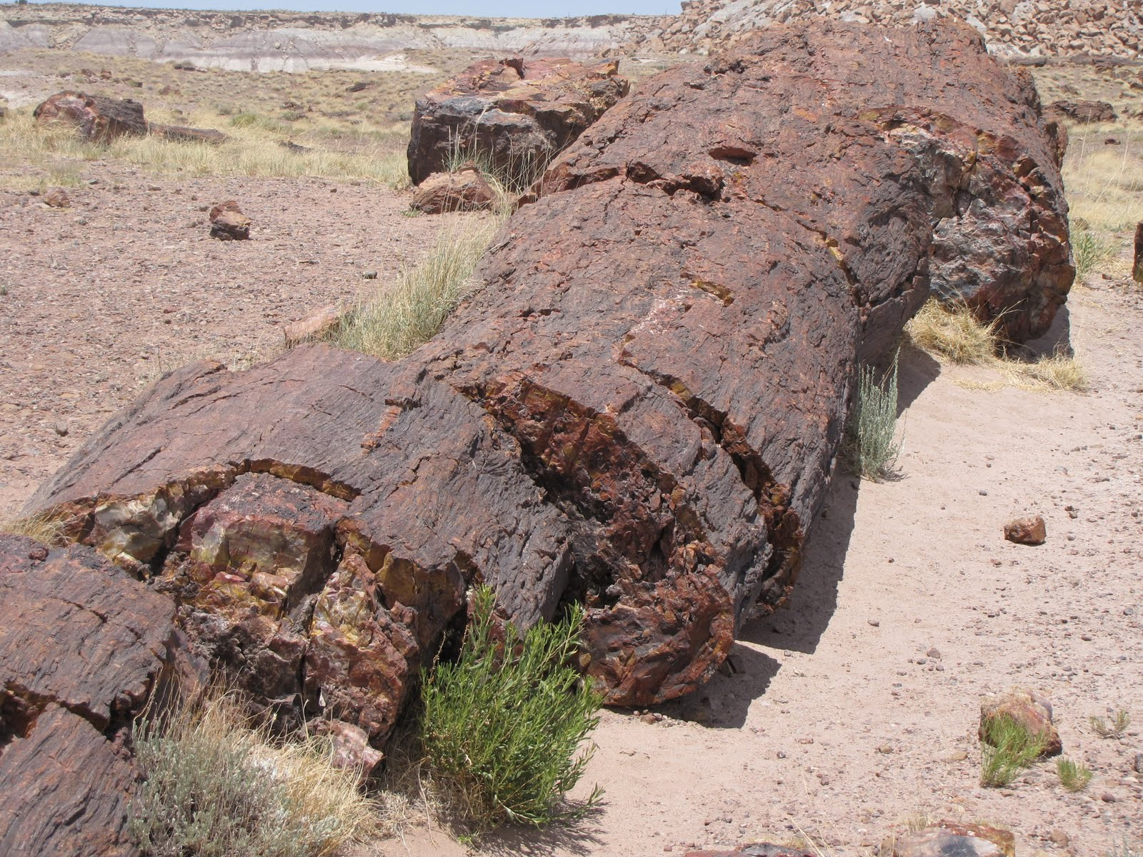 A Wrinkled Time Petrified Forest Plus Petroglyph Fun In Az