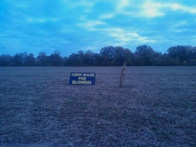 A-mazing corn maze - for blondes!