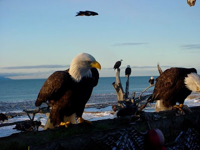 Feeding the Eagles!