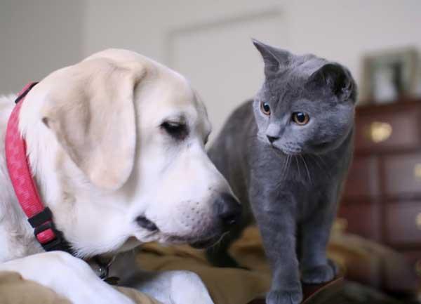 Cat Keeps Stalking Dog