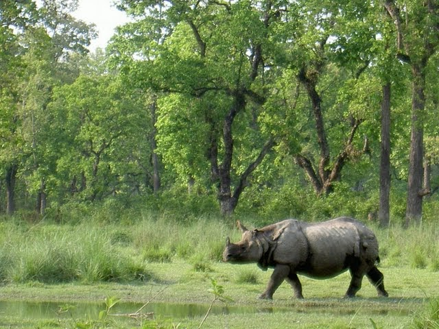 Chitwan --- Culture, Wildlife, and exciting adventure ...