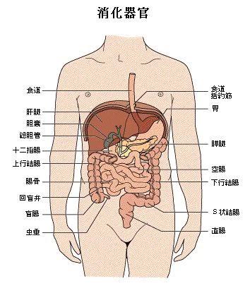 解剖、生理、栄養の覚え書き