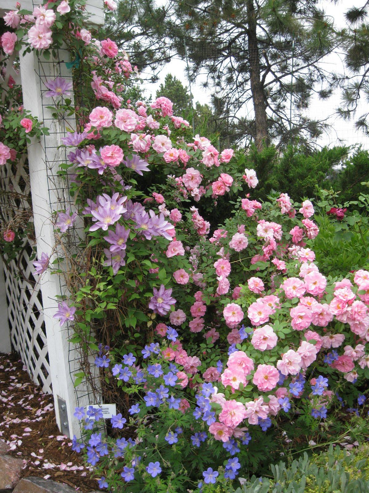 Cottage Flower Garden
