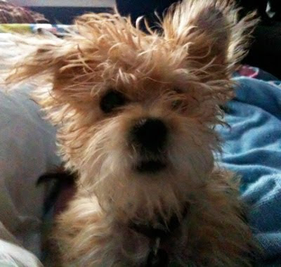 How do you say 'bed head' in dog? - AMERICAblog News
