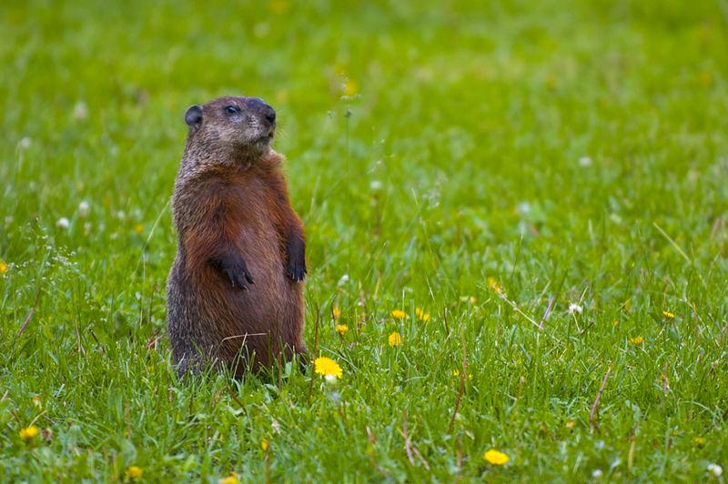 mystic valley musings: Groundhog Day