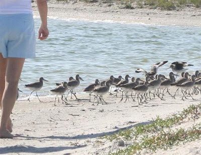 birds on Don Pedro Island