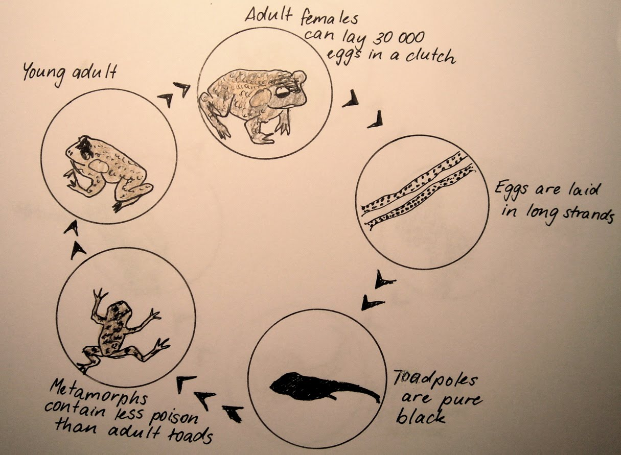 Toadally Awesome Toad Facts