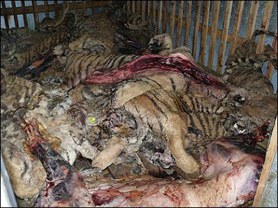 262AB2A500000578-0-image-m-4_1425271580765 Bali 9 Execution