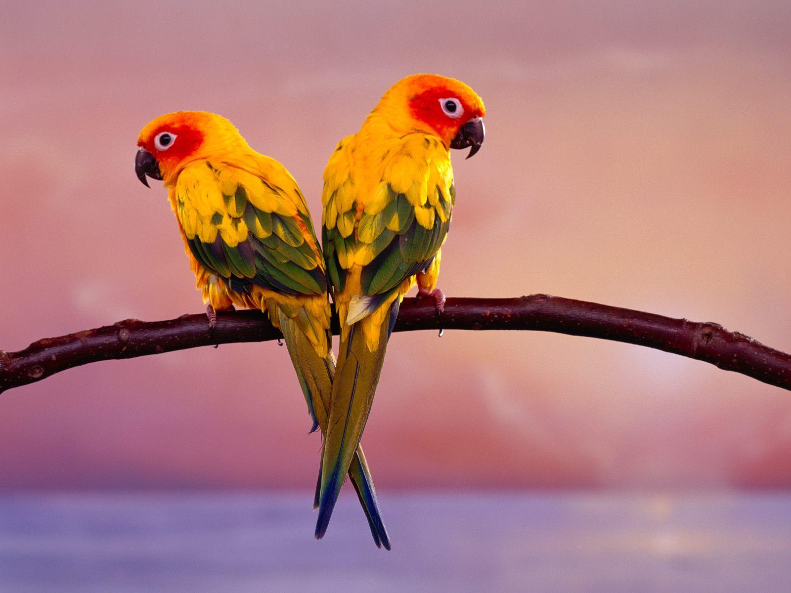Birds HD widescreen Wallpaper | Hd Wallpaper
