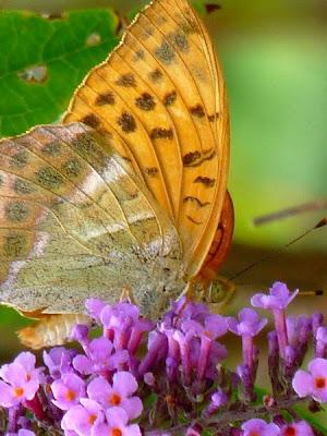 La Chasse Aux Papillons Paroles : chasse, papillons, paroles, Journal, Chrys: