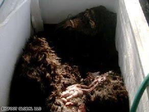 ogopogo carcass