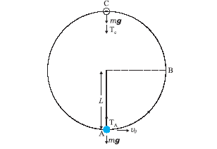Physics Complete: Motion of a body in a vertical circie