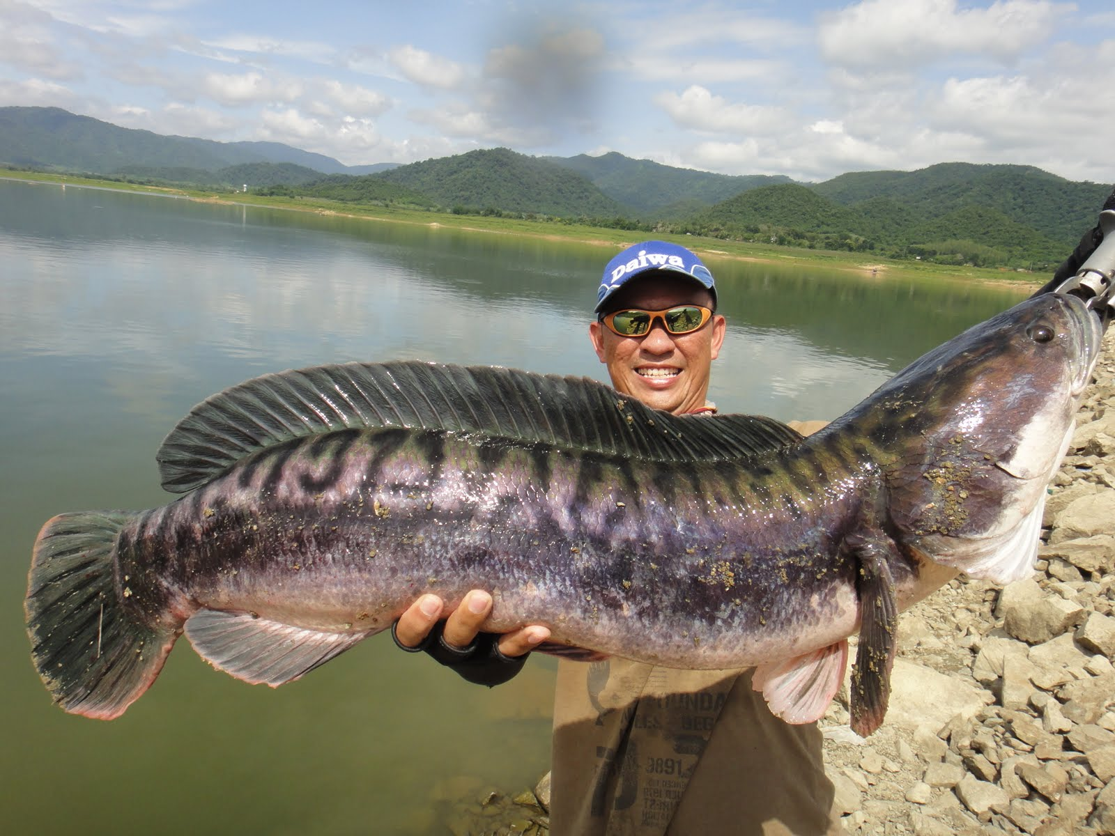 Thailand Giant Snakehead (Toman) And Wild Fishing.: 11.5kg ... - photo#27