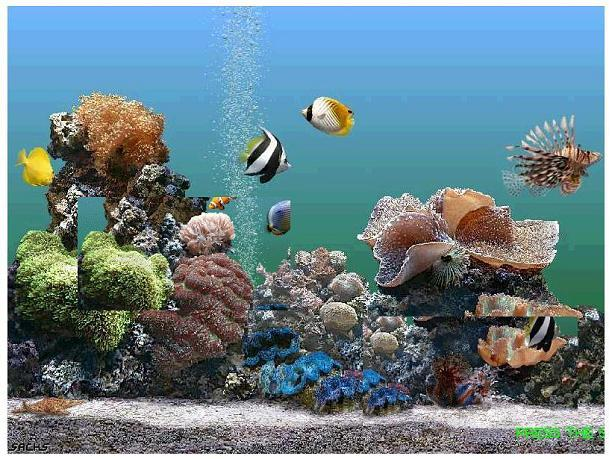 setting up and maintaining a saltwater If you're planning to set up a reef aquarium, get off to a good start by doing a little  research  this is the level you want to maintain in your reef tank at all times.