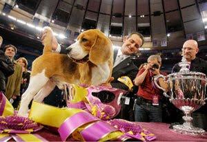 Uno the Beagle Fan Club