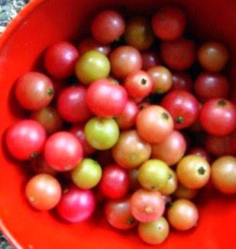 Fruits Stand: Aratilis