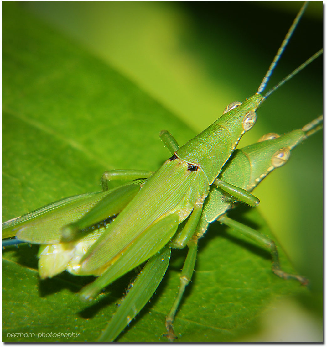 leaves and grasshopper relationship tips