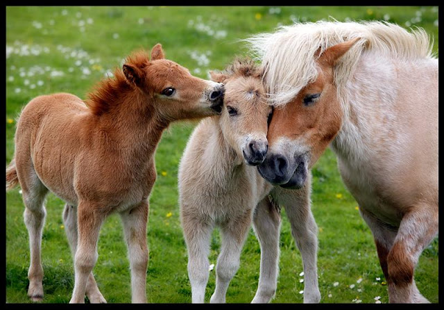 Lovely animals family portraits ~ Weird and wonderful news ...