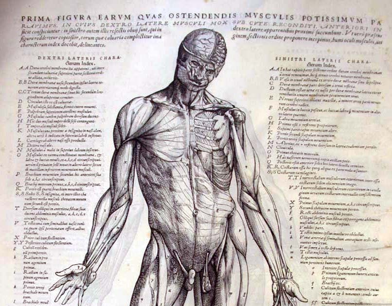 arh346: History of Graphic Design (and more): anatomy & physiology ...