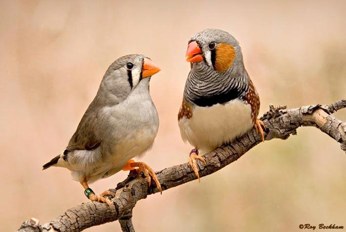 STAR TAME BIRDS: Jan 24, 2011