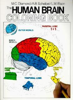 Mr Cantor S Ap Psychology Blog Human Brain Coloring