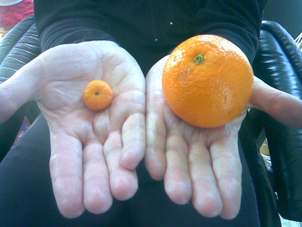 vad är andens frukter