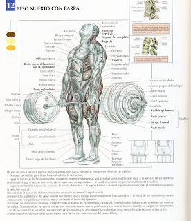 Prueba Metabolismo basal