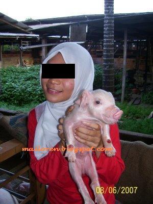 JAIS siasat Orang Melayu bOleh Makan Babi  P U T E R