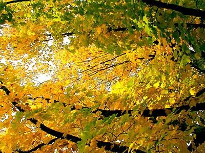 ramas-con-hojas-vistas-al-trasluz