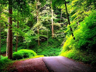 camino-adentrandose-en-el-bosque