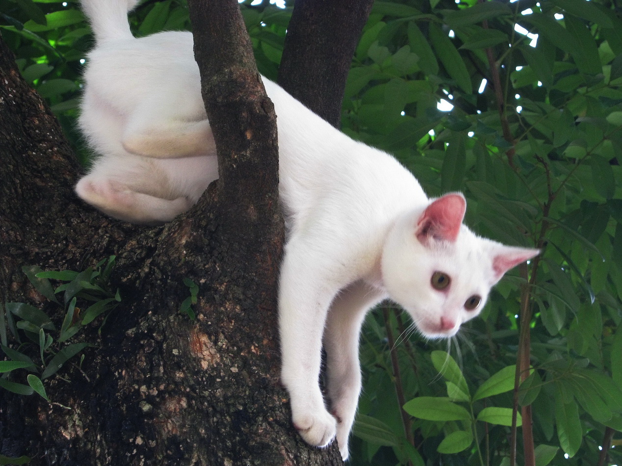 Indoor Cat Climbing Tree Playing On A Tree