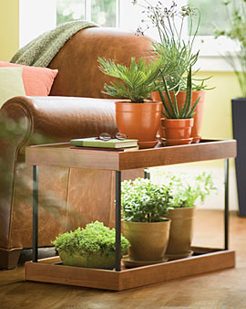 Really Any Table And Selection Of Potted Plants Could Work I Think The Key Is Finding A Sunny Window That Are Pretty Low Maintenance But