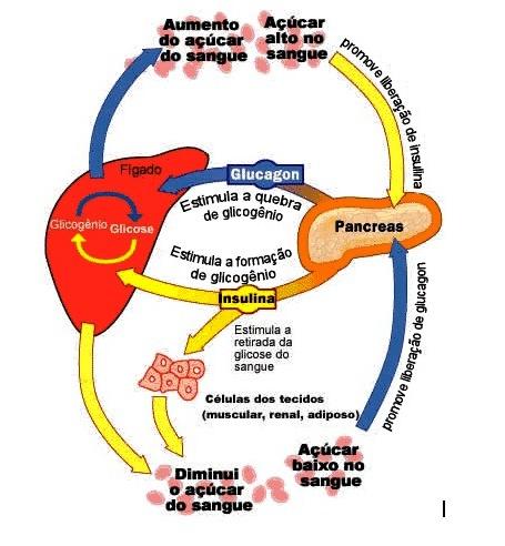 SINAPSE PRÉ-UNIVERSITÁRIO: A Importância da Glicose