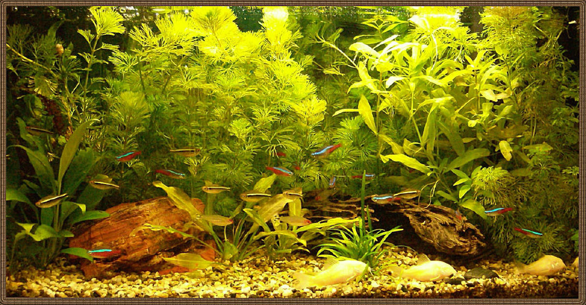 S.C.V. Aquascaping Ideas: Small Amazon Biotope - Juwel ...