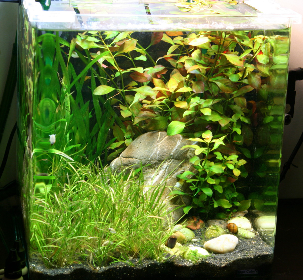 s c v aquascaping ideas dennerle nano cube 30 complete double light