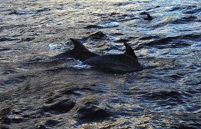 delfini Milford Sound