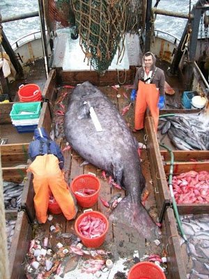 Big Fish Seen On www.coolpicturegallery.us