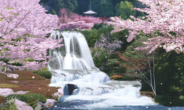 Japan Xxix Moving: Travel And Tourism: Japan Cherry Blossom Cute Place