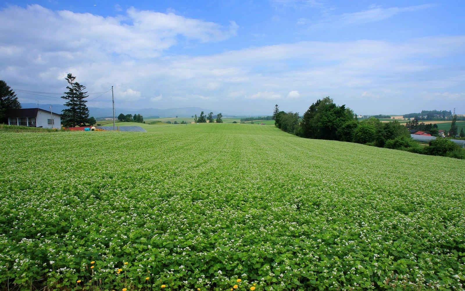 japan hokkaido landscape image - photo #27