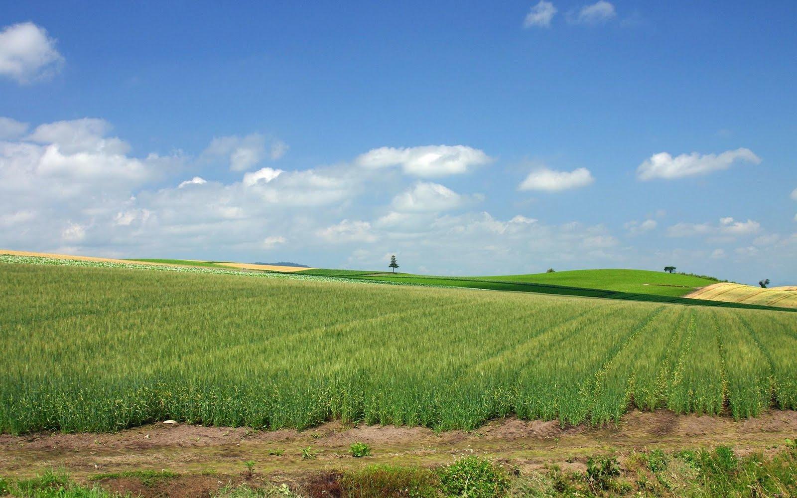 japan hokkaido landscape image - photo #18