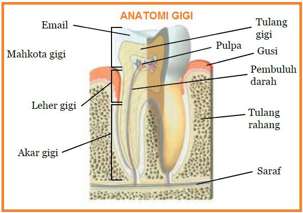 Biologi Gonzaga Pengantar Syst Pencernaan