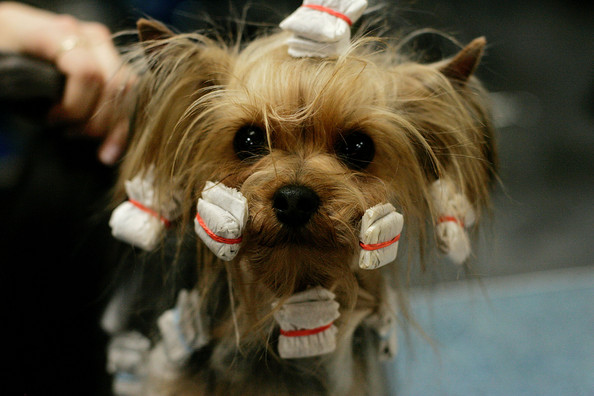 Cool Dog Hairstyles