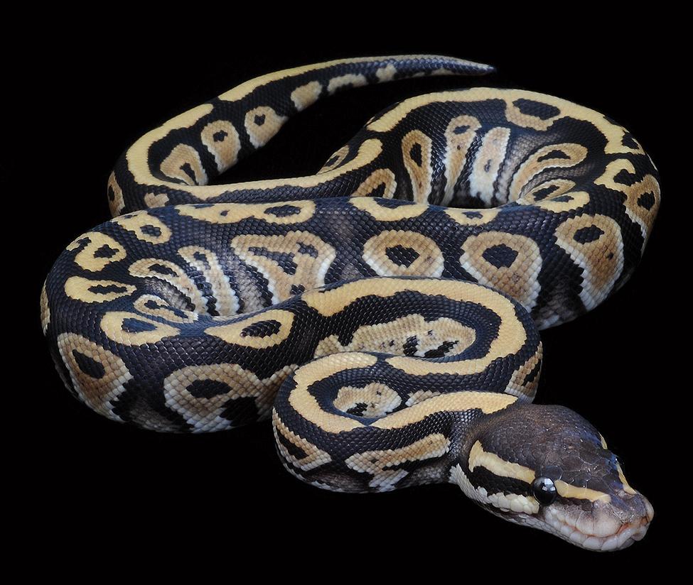 installez la bibliothèque python mac