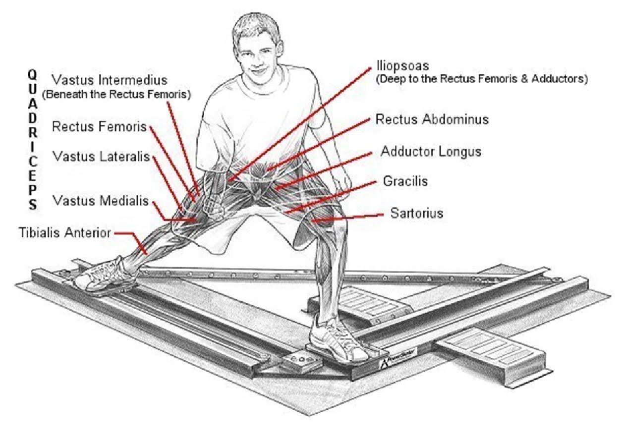 beaver skeleton diagram 1988 toyota corolla alternator wiring pilates patio january 2011