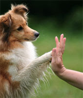 how to Communicate With Dog, how to Communicate With Dogs, Communicating With Dog, Communicating With Dogs, dog communication, dog communication, dog training dog, dog training dogs, how to train your dog, dog training tips