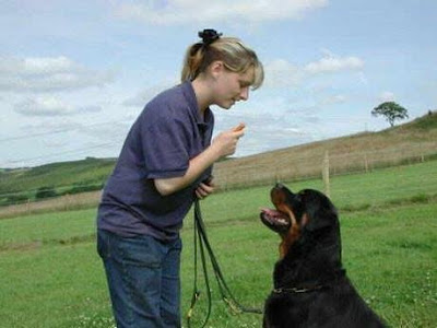 dealing with a difficult dog, dealing with difficult dogs, dog difficulty, dog difficulties, dog behaviour, dog behavior, dog aggression, aggressive dogs, aggressive dog, dog problem solution, how to deal with a difficult dog, how to deal with difficult dogs, dog behaviours, dog behaviors, Training Stubborn & Difficult Dog Breeds