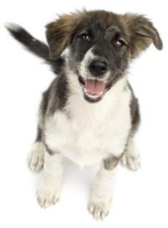 Tips on Raising a New Puppy raising a puppy raising a dog raising your puppy responsible dog owner raise a puppy dog's life puppy's diet puppy's life how to raise a puppy dog lovers Raise your puppy socializing your puppy