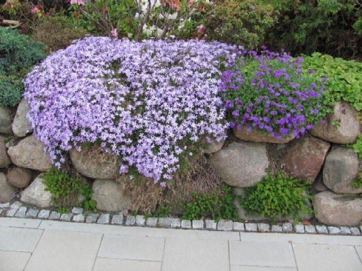 az4-Steinmauer-Findlinge-Grundstuecksgrenze-Gartenanlage-pflanzen - pflanzen fur steingarten immergrun