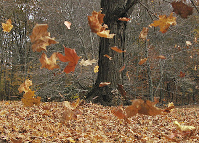 http://2.bp.blogspot.com/_5-m6MIR1Ojg/TJH-5wpnghI/AAAAAAAABLE/_YLUfJi3ORo/s1600/Blowing+Leaves.jpg